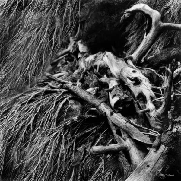 Art Print featuring the photograph Beach Wood by Blake Richards