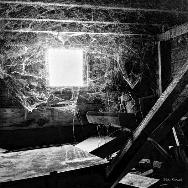 Art Print featuring the photograph Webbed Window by Blake Richards