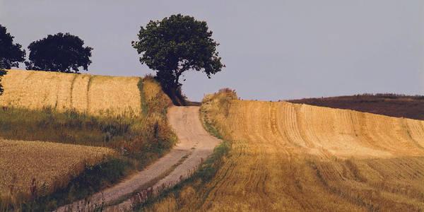 Denmark Art Print featuring the photograph Harvest Time by Wedigo Ferchland
