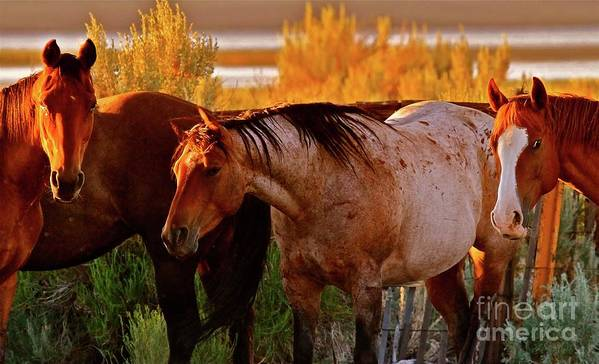 Horse Art Print featuring the photograph Three Horses Of A Suspicious Corral by Gus McCrea