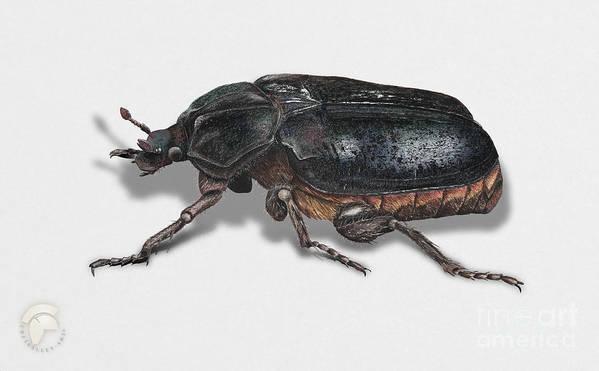 Illsustration Art Print featuring the painting Hermit Beetle - Russian Leather Beetle - Osmoderma Eremita - Pique Prune - Erakkokuoriainen by Urft Valley Art