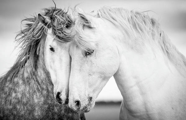 Horse Art Print featuring the photograph Friends V by Tim Booth