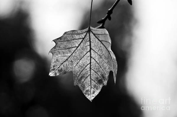 Last Standing Leaf Art Print featuring the photograph Last Standing Leaf by Paulo Perestrelo