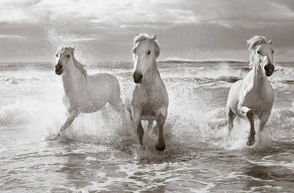 Horse Art Print featuring the photograph Run White Horses II by Tim Booth