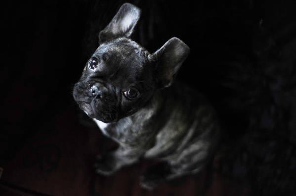 Dog Art Print featuring the photograph Magoo IIi by Rafa Rivas