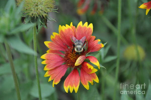 Flower Art Print featuring the photograph Summer by Jo Thompson Pennypacker