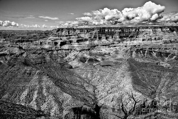 Canyon Art Print featuring the photograph The Grand Canyon by Bob and Nadine Johnston