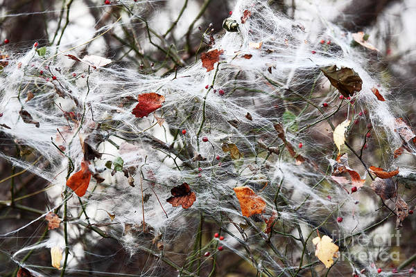 The Web Art Print featuring the photograph The Web by John Rizzuto