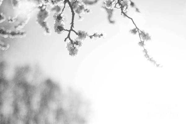 Spring Art Print featuring the photograph Blossom by Erin Hensley