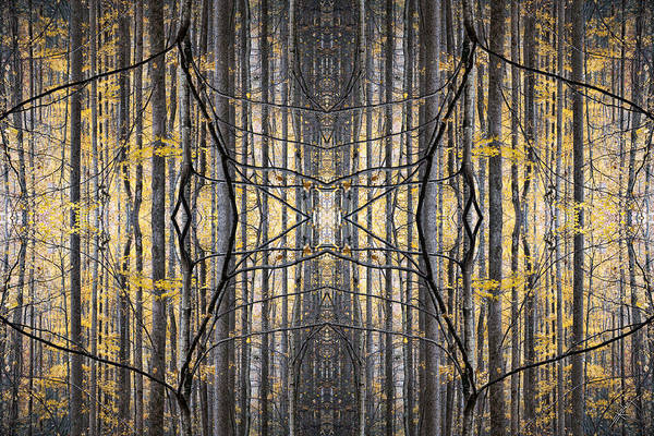 Nature Art Print featuring the photograph Poplar Cathedral by Ed Kelley