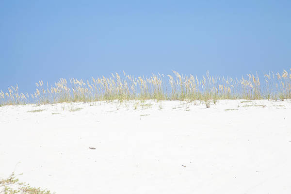 Sea Oats Art Print featuring the photograph Simplicity by Toni Hopper
