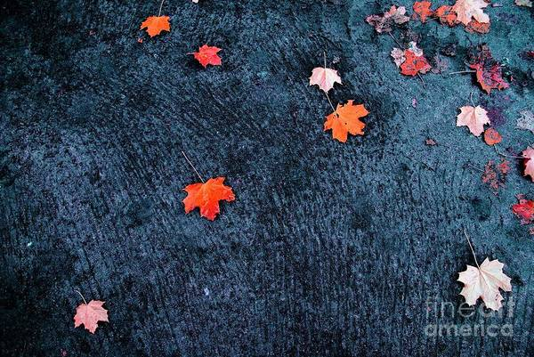 Autumn Art Print featuring the photograph About Autumn by Vadim Grabbe
