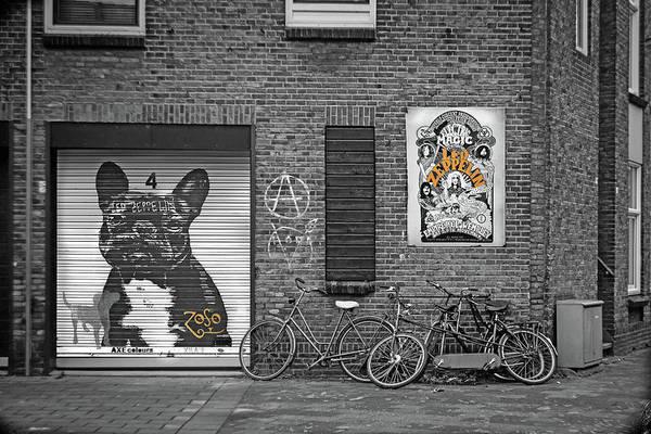 Black Dog Led Zeppelin by Mal Bray