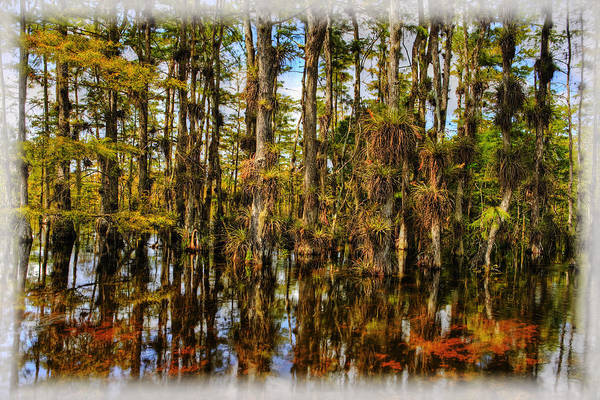 Everglades Art Print featuring the photograph Cypress Strand Everglades by Jim Dohms