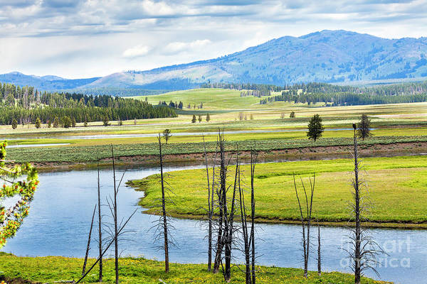 Hayden Valley Art Print featuring the photograph Eagles View, Hayden Valley, Yellowstone by Daryl L Hunter