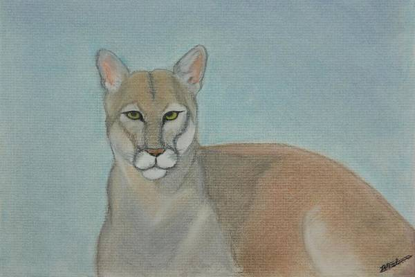 Mountain Lion Art Print featuring the painting Mountain Lion - Pastels - Color - 8x12 by B Nelson