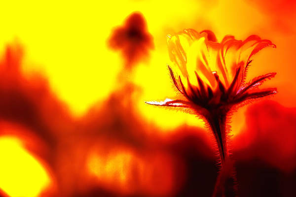 Flower Art Print featuring the photograph New Bloom by Jim Dohms