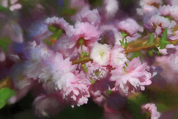 Flowering Almond Art Print featuring the photograph Pink Flowering Almond by Donna Kennedy