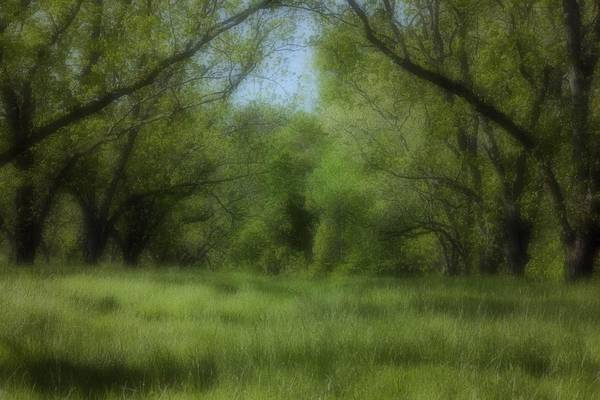 Landscape Art Print featuring the photograph The Meadow by Ayesha Lakes