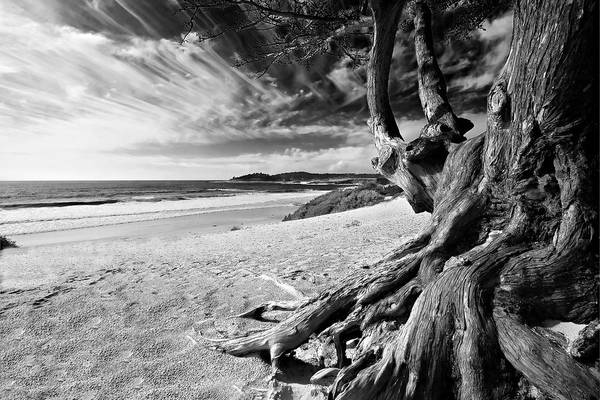 Carmel Beach Tree Roots Sandy Monterey Peninsula California Coastline Pacific Ocean Usa Black And Wh Art Print featuring the photograph Tree Roots Carmel Beach by George Oze