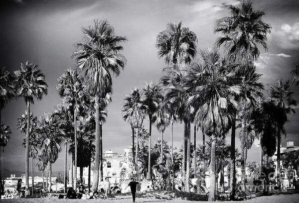 Venice Beach Palms Print featuring the photograph Venice Beach Palms by John Rizzuto