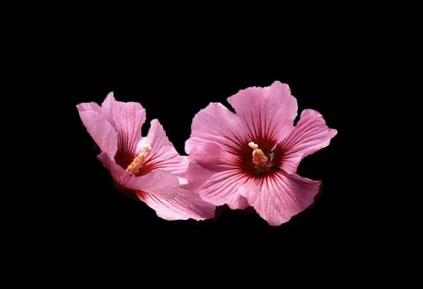 Flower Art Print featuring the photograph 102708-1 Standing Out by Mike Davis