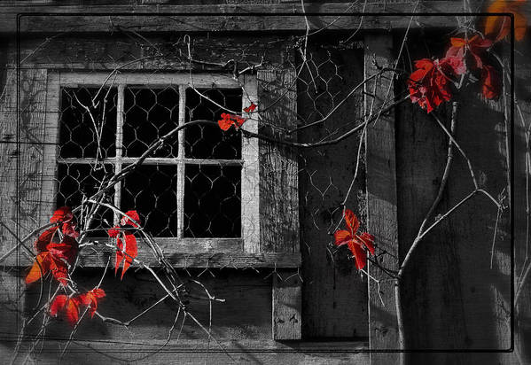 Window Art Print featuring the photograph Virginia Creeper by Thomas Schoeller