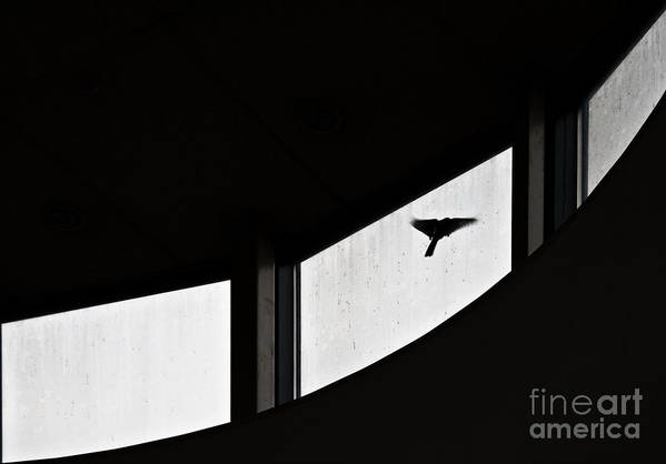 Bird Art Print featuring the photograph Desire by Vadim Grabbe
