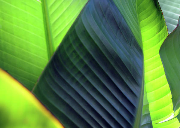 Leaves Art Print featuring the photograph Just Leaves by Haleh Yaghmai