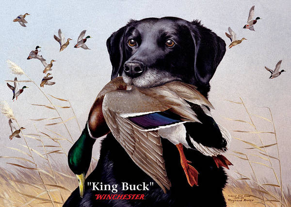 Dog Art Print featuring the painting King Buck  1959 Federal Duck Stamp Artwork by Maynard Reece