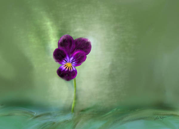 Pansy Art Print featuring the digital art Pansy by Lisa Redfern