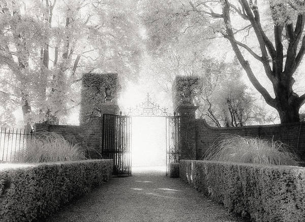 Garden Art Print featuring the photograph Garden Gate by Michael Hudson