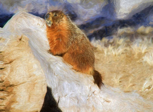 Groundhog Art Print featuring the photograph Mountains To Climb by Donna Kennedy