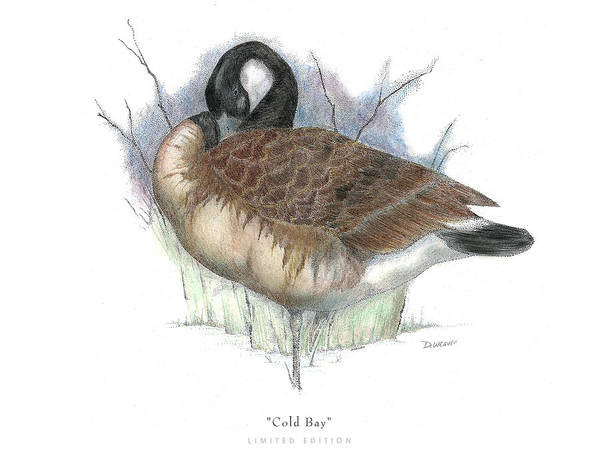 Canadian Goose Print featuring the drawing Cold Bay by David Weaver