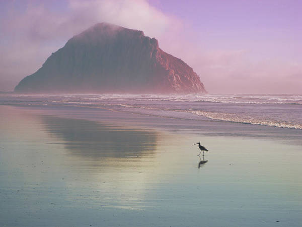 Morro Art Print featuring the photograph Morro Rock by Kevin Bergen
