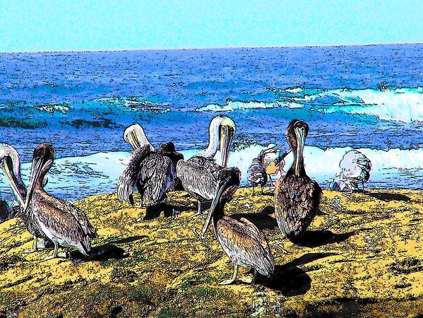 Brown Pelican Art Print featuring the photograph Pelican Rock by Mark Cheney