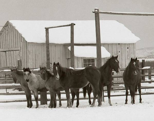 Horses Art Print featuring the photograph 71 Ranch by Diane Bohna
