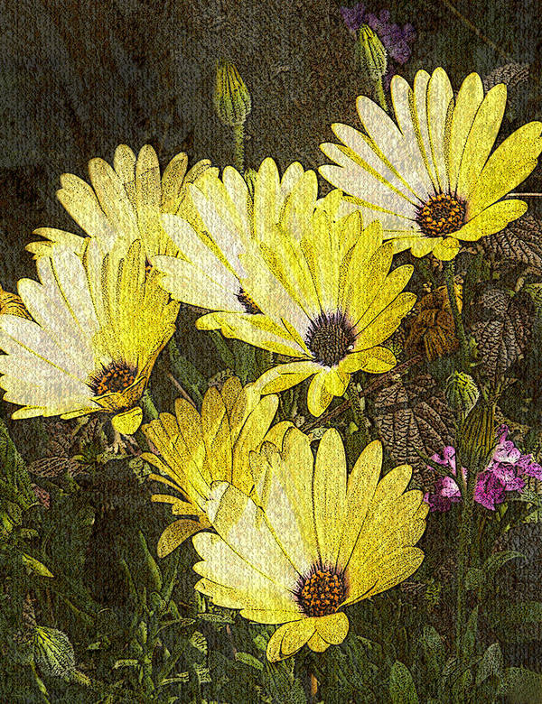 Digital Art Art Print featuring the digital art Daisy Daisy by Tom Romeo