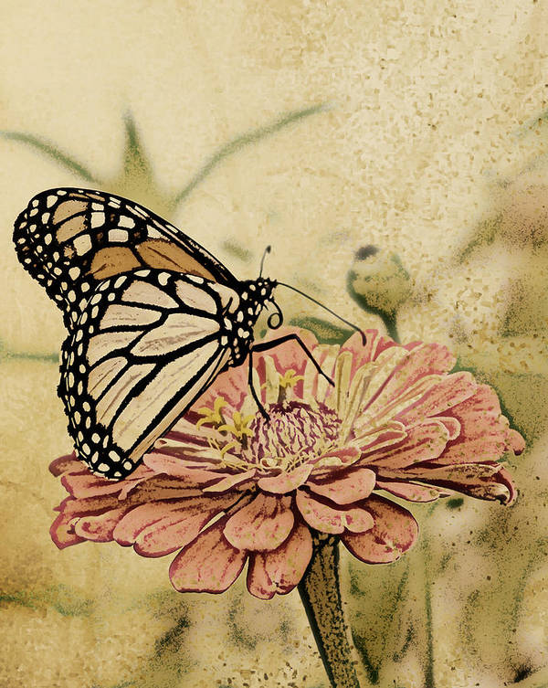 Butterfly Art Print featuring the digital art Painted Beauty by Sally Engdahl