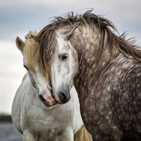 Horses Art Print featuring the photograph Friends by Tim Booth