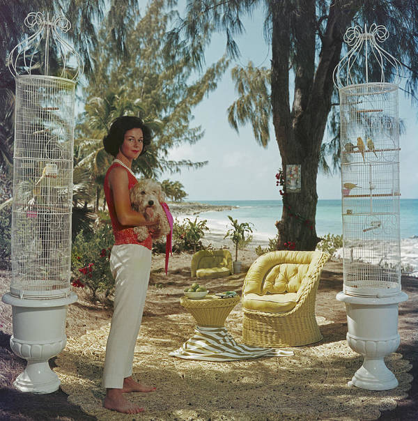Pets Art Print featuring the photograph Gloria Schiff by Slim Aarons