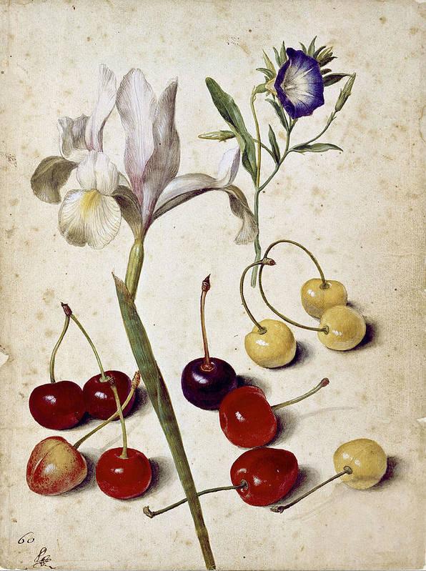 Spanish iris morning glory and cherries by Georg Flegel