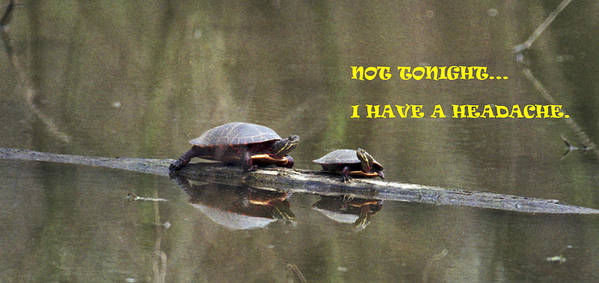 Turtles Art Print featuring the photograph 070406-68-a by Mike Davis