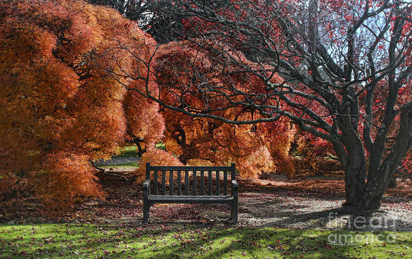 Fall Leaves Orange Bench Trees Encounter Landscape Digital Photography Canvas Prints Art Print featuring the photograph Brilliant Encounter by Carolyn Staut