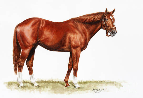 Secretariat Art Print featuring the painting Secretariat Study by Thomas Allen Pauly