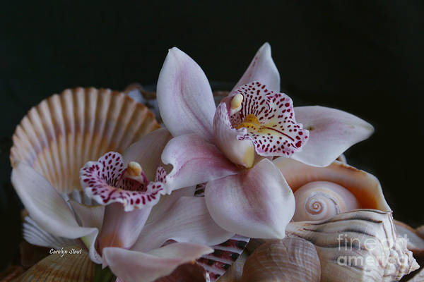 Orchid Pink Shells Tropical Paradise Beach Flowers Framed Matted Canvas Prints Art Print featuring the photograph Orchid Garnish by Carolyn Staut