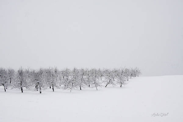Winter Art Print featuring the photograph Apple Orchard in Winter by Linda Lee Hall