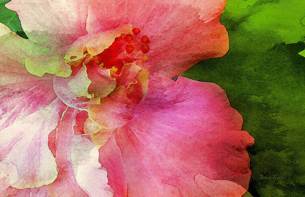 Pink Hibiscus Watercolor Art Print featuring the digital art A Splash Of Color by James Temple