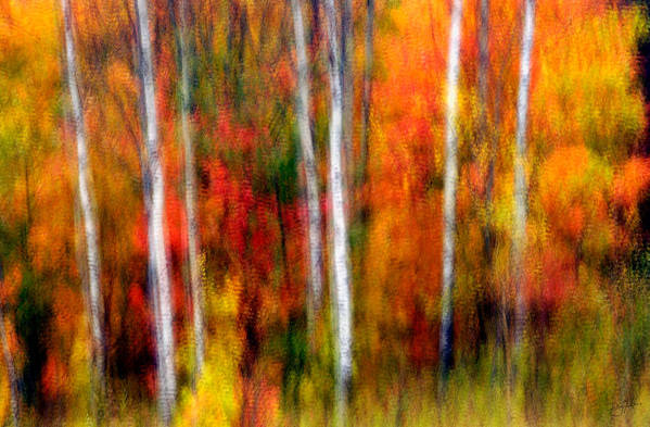 Canada Art Print featuring the photograph Autumn Dreams by Doug Gibbons