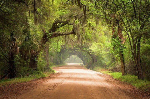 Dirt Road Art Print featuring the photograph Charleston SC Edisto Island Dirt Road - The Deep South by Dave Allen